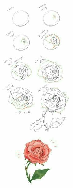 37 Trendy flowers drawing illustration rose - New Tutorial and Ideas Drawing Techniques, Drawing Tips, Drawing Sketches, Pencil Drawings, Painting & Drawing, Drawing Drawing, How To Draw Sketches, How To Sketch, Tattoo Sketches