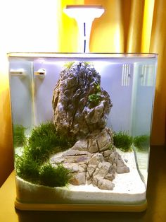 Betta nano tank Nano Tank, Aquascaping, Aquariums, Aquarium Fish, Betta, Tanks, Life, Home Aquarium, Fish Tanks