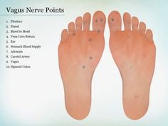 This shows the exact location of the points to hit when treating the parasympathetic and sympathetic nervous system. Coupled with the vagus nerve points vide. Alternative Health, Alternative Medicine, Holistic Wellness, Health And Wellness, Holistic Medicine, Vagus Nerve Stimulator, Nerf Vague, Foot Zoning, Reflexology Massage