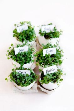 easter place card idea: eggshells filed with cress I Ostern, Tischdeko, Platzkarte, bepflanztes Osterei, Kresse Easter Table, Easter Eggs, Egg Shell Planters, Deco Nature, Festa Party, Easter Celebration, Easter Brunch, Egg Shells, Decoration Table