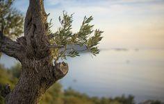 Χράνοι, Μεσσηνία: ένα χωριό κοντά στα αστέρια Greece, Places To Visit, Explore, Travel, Animals, Ideas, Greece Country, Trips, Animaux