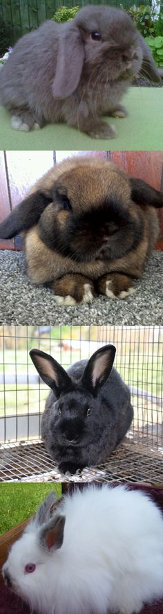 10 most popular and cutest breeds of bunnies that are raised as pets.