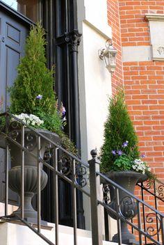 Spring, annuals, flowers, evergreen, columbine, allysum, urban, garden, landscape, design, front door, containers, planter