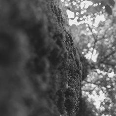 Escala tonal - por Catarina, 8C. Nesta foto, tirei de um ângulo inusitado a foto de uma árvore a onde é possível ver que existem diversas escalas tonais de cinza. O tronco da árvore apresenta um tom mais escuro de cinza e a copa dela vista acima apresenta um tom de cinza mais claro, fazendo um contraste com o céu quase branco, bem clarinho. O foco esta nos musgos da árvore.