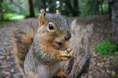 Squirrel #Squirrel #animals