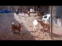 Funny animals-17 - YouTube