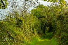 Ireland's green lanes hold more character than the famous locations such as the Dark Hedges - often overrun by tourists Irish Landscape, Ireland Landscape, Ireland Vacation, Ireland Travel, Hidden Places, Places To See, Photography Tours, Landscape Photography, Dublin Ireland