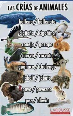 Learn Spanish For Adults Fun Key: 9023233343 Spanish Grammar, Spanish Vocabulary, Spanish Words, Spanish Language Learning, Spanish Teacher, Spanish Classroom, Spanish Lessons, Teaching Spanish, Spanish Activities