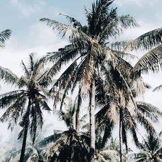 Palm jungle // via @jimsandkitty