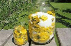 Co budeme potřebovat: 230 ks. pampeliškových květů 1,5 l vody 2 citrony 1 kg třtinového cukru postup: Květy sbíráme nejlépe v bezprašném prostředí, v plném květenství. Květiny necháme vysušit na sluníčku a zalijeme odměřenou vodou a necháme do druhého dne vyluhovat. Potom přecedíme přes plátno, zlehka protlačíme, přidáme citrony, dobře umyté a nakrájené na plátky, …