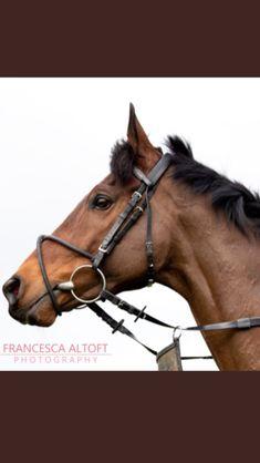 Race Horses, Horse Racing, Horse Photography, Thoroughbred, Animals, Animales, Animaux, Equine Photography, Animal