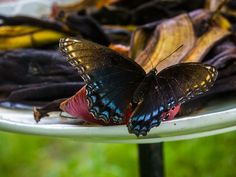 #Texas farmer attracts beautiful creatures to garden with easy project #butterflygarden