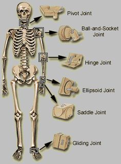 Human Joint Types, just need to change it to livestock, which shouldn't be hard!