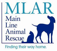 Main Line Animal Rescue
