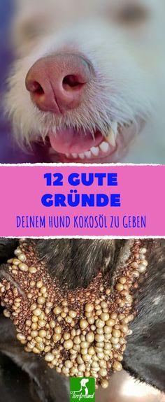 Wenn du deinem Hund täglich 1 TL Kokosöl pro 10 Kilo gibst, wird er es dir aus 12 Gründen danken.
