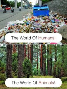 #Humans #garbage #nature #animals #clean #dirty #world #people #junk #mess #forest