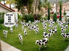 LOL How would you like to wake up to THIS on your front lawn? Birthday lawn ornaments -birthday signs