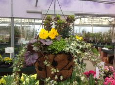 Beautiful example of a year round hanging planter.