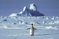 #Climat L'Antarctique se réchauffe plus vite que prévu