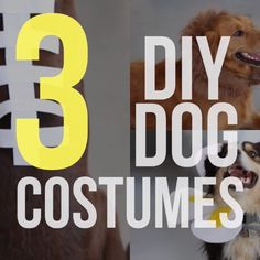 National Holidays: 18 DIY Pet Costumes for Halloween Diy Dog Costumes, Pet Halloween Costumes, Dog Halloween, Costume Ideas, Costume Chien, Dog Training Tips, Agility Training, Dog Agility, Potty Training