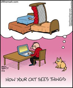 So true!! My cat will lay in anything like a bed!! As long as he's by one of us!!