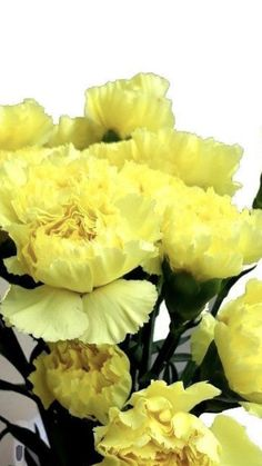 Yellow Carnations, Mini Carnations, White Carnation, Peach Flowers, Cream Flowers, Colorful Flowers, White Flowers, Beautiful Flower Quotes, Beautiful Flowers