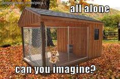 lonely dog « doggyholic.com