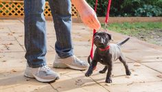 8 Tips on Walking Your Dog Safely Every Single Day | Top Dog Tips