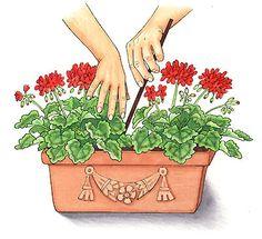 Helga Meyer Illustration and garden advice