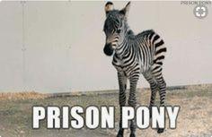 Prison pony alternate animal names, animal names funny, funny names, kid names, Funny Animal Names, Funny Names, Funny Animal Pictures, Kid Names, Animal Memes, Funny Animals, Cute Animals, Children Names, Large Animals