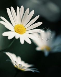 凛  #flower #jp_views2nd #team_jp_ #nature #igersjp #instaflower #instaphoto #photooftheday #季節 #風景 #ザ花部 #jp_gallery  #japanfocus #gf_japan #ig_japan #花 #scenery #instapic #picture_to_keep #はなまっぷ #tokyocameraclub #far_eastphotography #as_archive #ファインダー越しの私の世界 #写真好きな人と繋がりたい #過去写真 by lovexbite