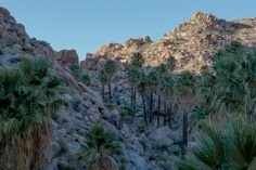 EarthPorn is your community of landscape photographers and those who appreciate the natural beauty of our home planet. Joshua Tree National Park, National Parks, Route 66 Road Trip, Landscape Photographers, Oasis, Mount Rushmore, Natural Beauty, Oc, Palm