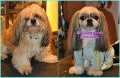Beautiful before & after Asian style shih Tzu by Margaret