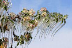 Вот что бывает вприроде, когда вдело вступает зима.Сосульки на цветущей яблоне.