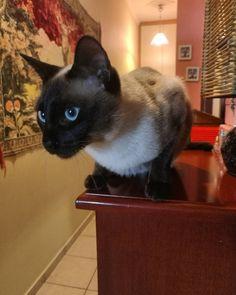 """148 """"Μου αρέσει!"""", 3 σχόλια - Dimitris Papafotis (@garfield_lagertha_elwyn) στο Instagram: """"#catoftheday #cat #cats #catsofinsta #catsofinstgram #kitten #kittensofinstagram #kitty #kittens…"""""""