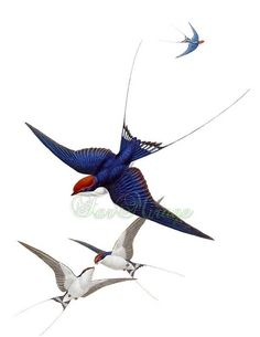 New tattoo bird vintage etsy Ideas Bird Pictures, Vintage Pictures, Vintage Images, Swallow Bird Tattoos, Tattoo Bird, Sparrow Tattoo Design, Lantern Tattoo, Mandala Doodle, Retro Images