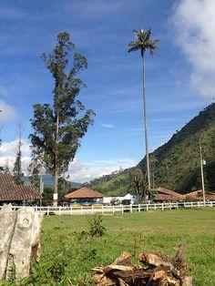 Cocora Valley. Quindio - Colombia
