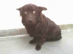 Poor little Shadow seems to be a very worried dog. Please help him find a safe home.