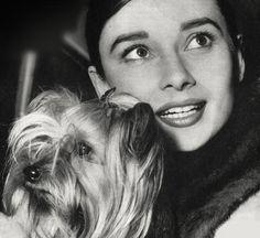 Mr Famous & Audrey Hepburn. #iLoveAnimalsToo #ancheIoAmoGliAnimali #yoTambienMeEncantanLosAnimales