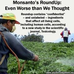 It's bad enough that regulatory agencies continue to allow tons of Monsanto's herbicide, Roundup, to be sprayed on food crops - despite evidence that the herbicide's key ingredient, glyphosate, causes birth defects, endocrine disruption and a host of other health problems. Now, a new study says the most widely used herbicide in the world is even more toxic than we thought.