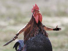 Kuşların Kolları Olsa Ne olurdu?