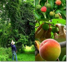 40 Years into a Cold Climate Food Forest. I so love the idea of a food forest!!