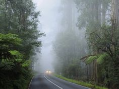 It does get very misty up here in the Ranges.