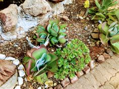 Copyright By Nkahloleng Eric Mohlala Copyright ©️ 2021 By Eric Nkahloleng Mohlala, www.mohlalaads.co.za Paddle Plant, Succulents, Gardening, The Originals, Plants, Lawn And Garden, Succulent Plants, Plant, Planets