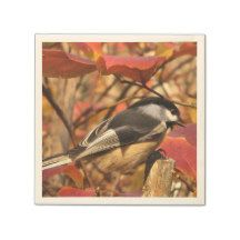 Chickadee Bird in Pink and Red Autumn Leaves Paper Napkin