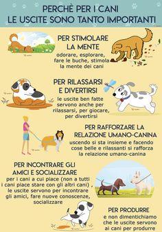 Gatto Scottie Terrier  Gattino Originali 22 Barboncino Peluche in borsetta