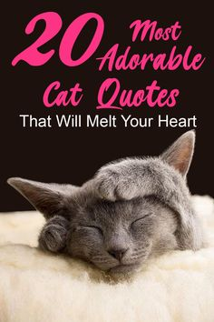 There's the dog people, and then there's the cat people, and that battle may rage on forever. For cat people who'd like to display adoration for their furry friends on social media or elsewhere, these funny cat quotes about frisky felines are sure to put a smile on your face. Here is 20 Adorable Cat Quotes That Will Melt Your Heart. Every cat lover can relate to these cute and funny sayings. #CatQuotes #ilovecats #ilovekittens #cats Cute Cat Quotes, Dog Quotes, Funny Quotes, Inspirational Cat Quotes, Curiosity Quotes, Adoption Quotes, Curiosity Killed The Cat, Cat People, Cute Cats And Kittens