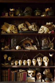 Eclectic display of objects, mostly skulls. The collector Cohn's story is interesting. See below link