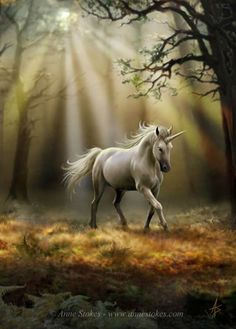 Fantasy horses Unicorn, art, hest, enhjørning, forrest, wood, sun, reflections, running, solitude, silence