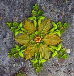 [ॐ] Omwoods: Flower Mandala Nature Magick Mandalas Mandala Art, Mandala Tattoo, Mandala Drawing, Tattoo Art, Art Et Nature, Nature Crafts, Rangoli Designs, Land Art, Art Floral